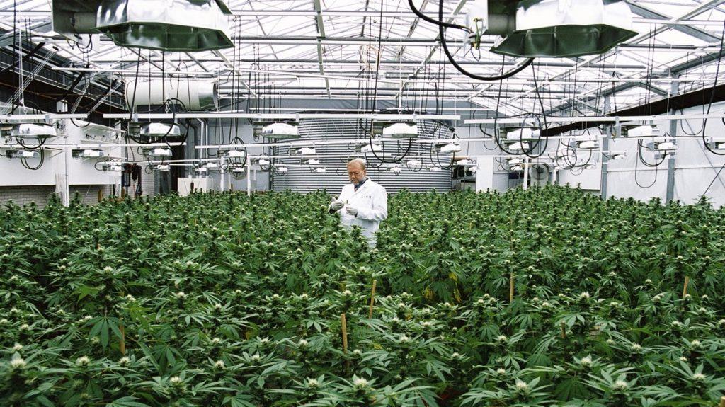 Cannabis grow facility security