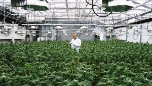 Cannabis grow facility security